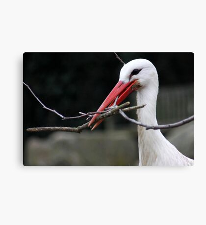 Sticks for the Nest Canvas Print