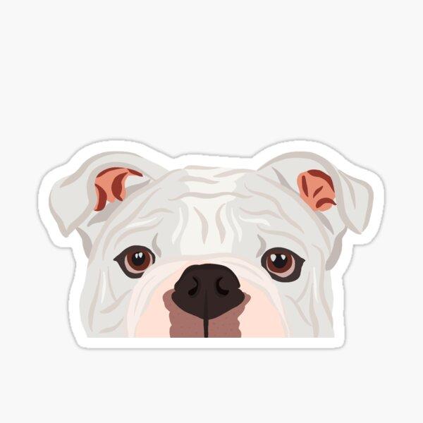 Curious White Bulldog Sticker