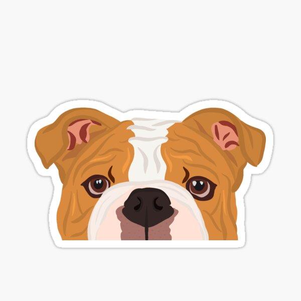 Curious Copper Bulldog Sticker