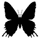 8-bit Simplex pixel Black butterfly by blackhalt