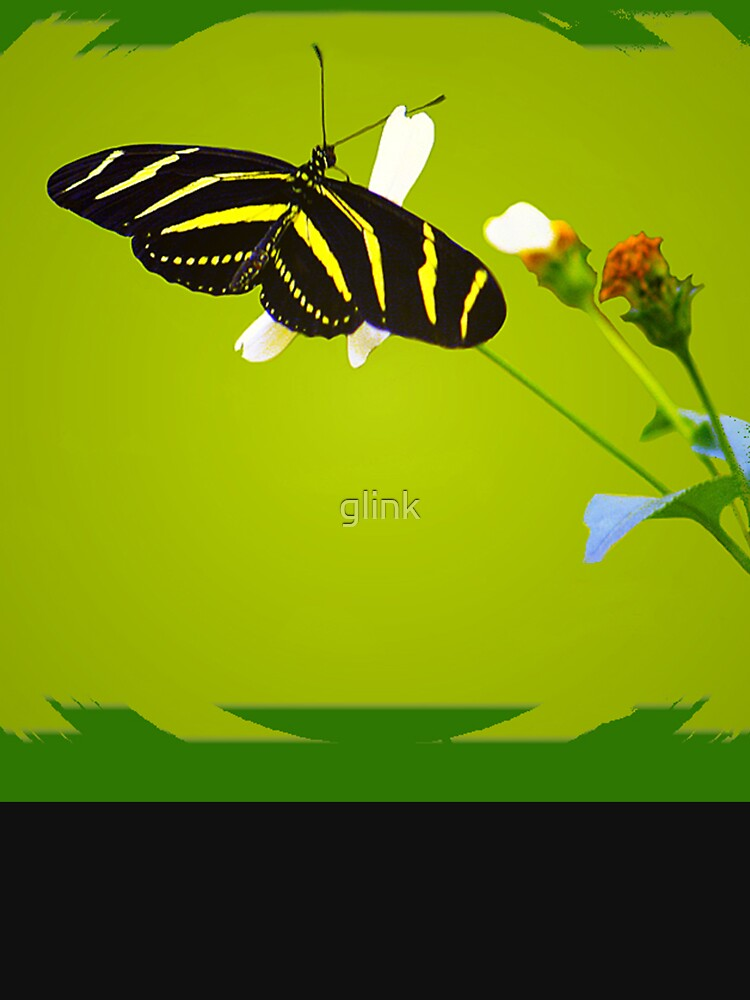 Zebra Butterfly by glink