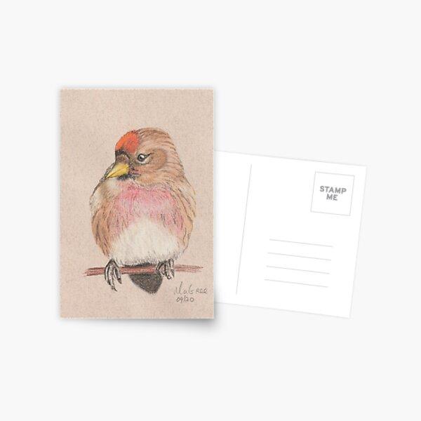 Redpoll/Sizerin Flammé Postcard