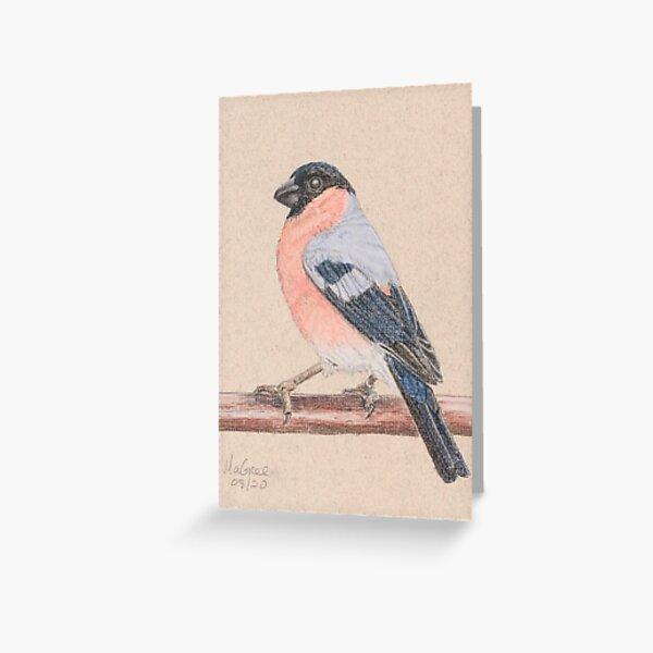 Bullfinch/bouvreuil Greeting Card