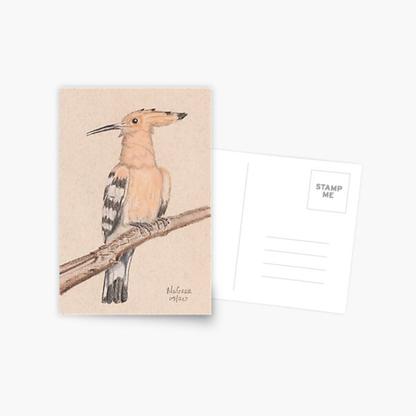Hoopoe/Huppe Postcard
