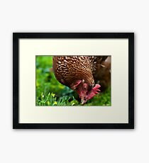 Neighborhood Chicken Framed Print