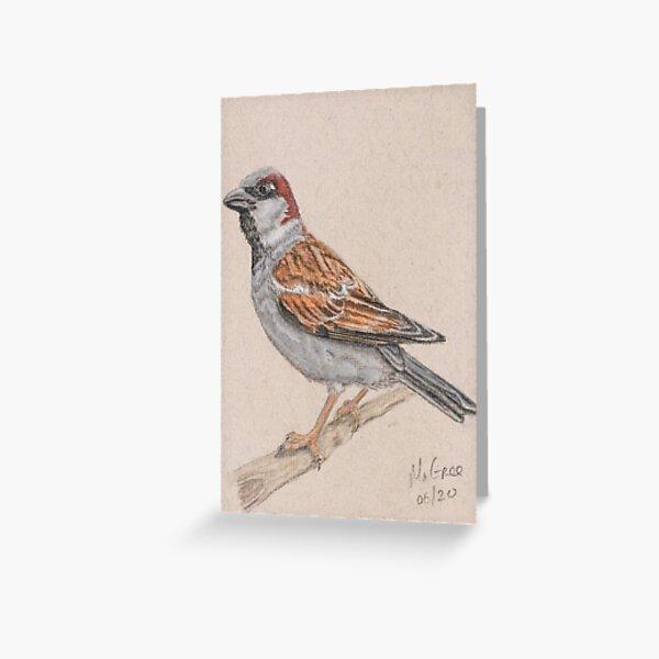 House Sparrow/Moineau Greeting Card