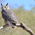 Great Horned Owl on a Branch by Kathleen Brant