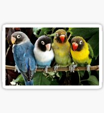 Parrots/Birds Sticker
