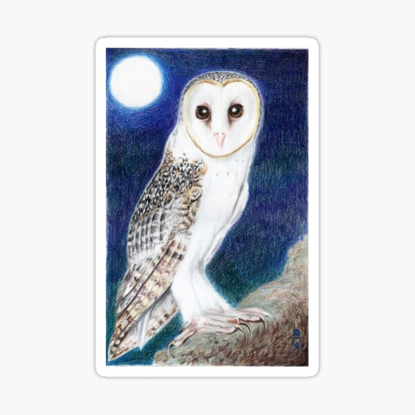 Mid-Summer's Eve: Barn owl Sticker