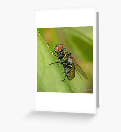 Wet Fly Greeting Card