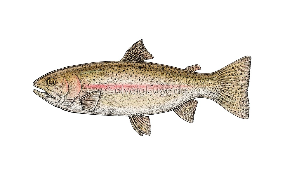 Rainbow Trout by SolveigEugenia