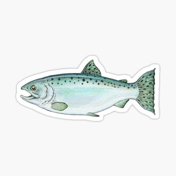 Coho Alaska Salmon Sticker