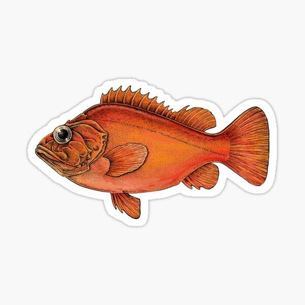Sebastes Sticker