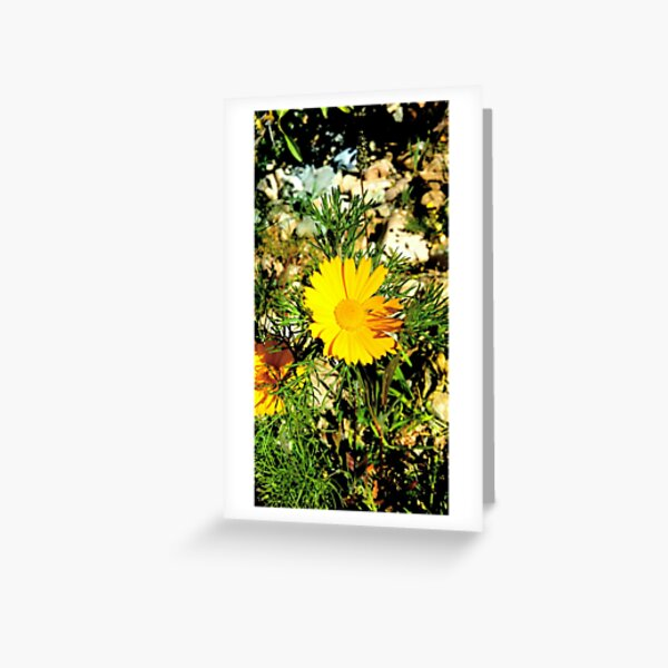 An awesome flower from nature Greeting Card