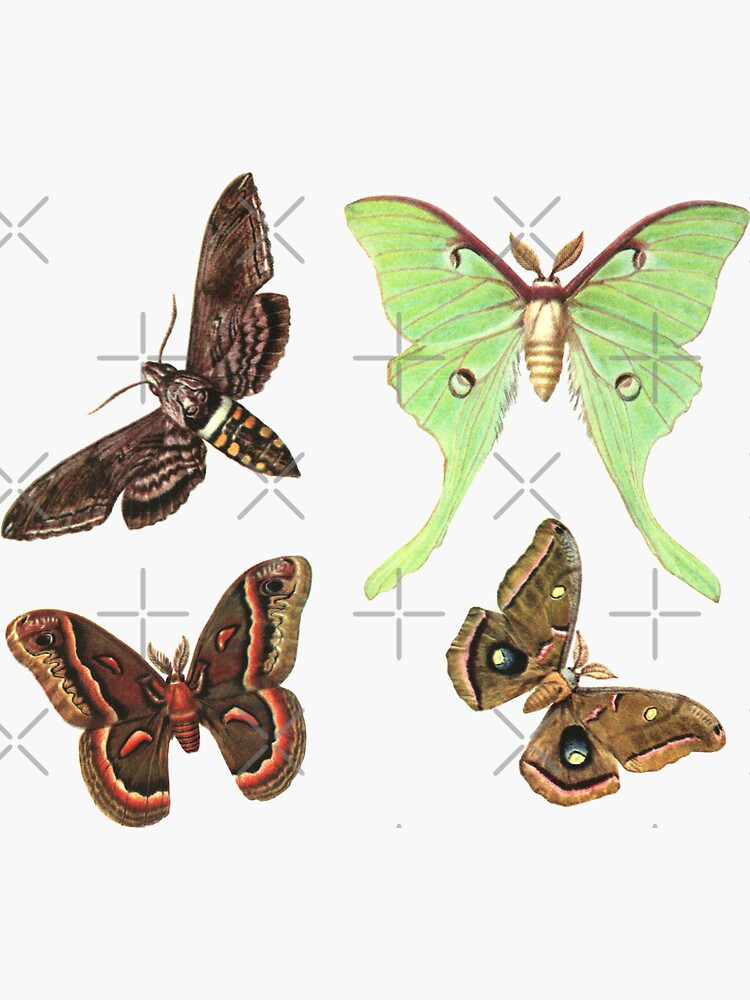Moths Collection No.2 - Sticker Pack by elevens