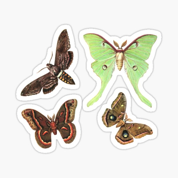 Moths Collection No.2 - Sticker Pack Sticker