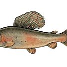 Arctic Grayling by Eugenia Hauss