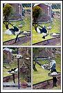 Feeding magpie  by missmoneypenny
