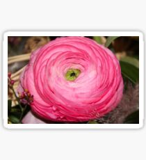 Ranunculus Sticker