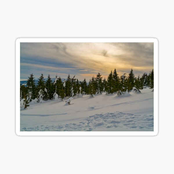 winter touch in a forest Sticker