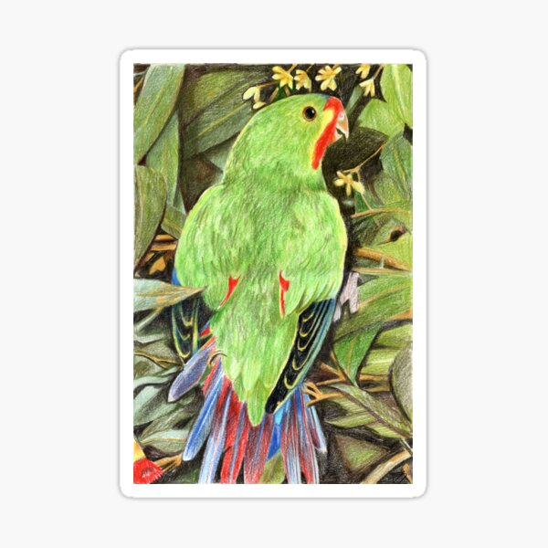 Swift Parrot Sticker