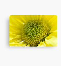 yellow daisy macro Canvas Print