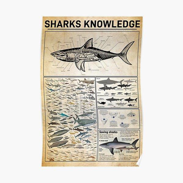 Sharks Knowledge Poster