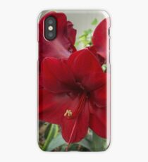 Christmas Red Amaryllis Flowers iPhone Case/Skin