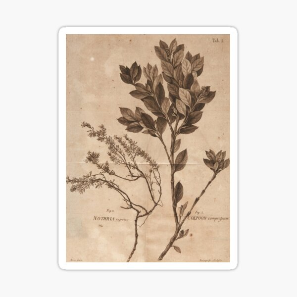 Cartel de la clase de herbología. Pegatina