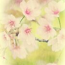Dreamy Faded Vintage Pale Pink Sakura Cherry Blossoms by Beverly Claire Kaiya