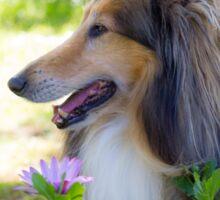 Collie In The Garden Sticker