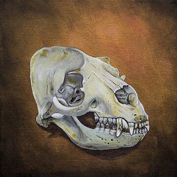 Australian Sea Lion Skull by afletcher