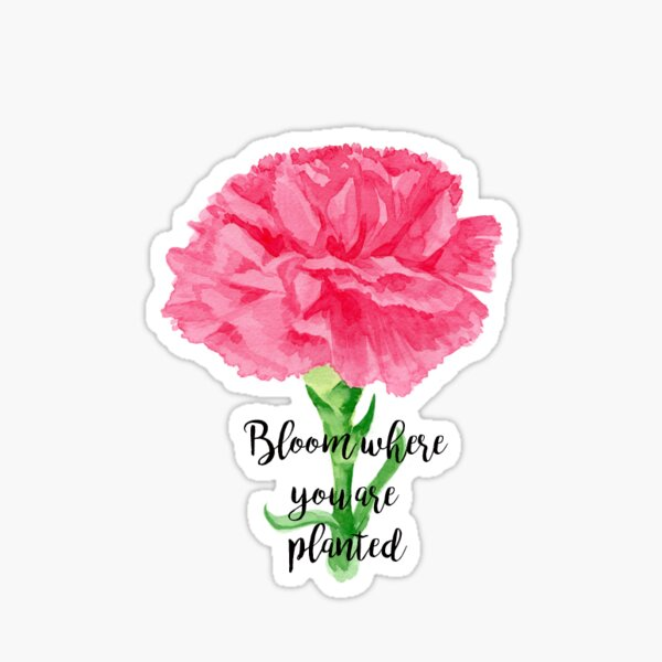 Bloom Where You Are Planted Sticker
