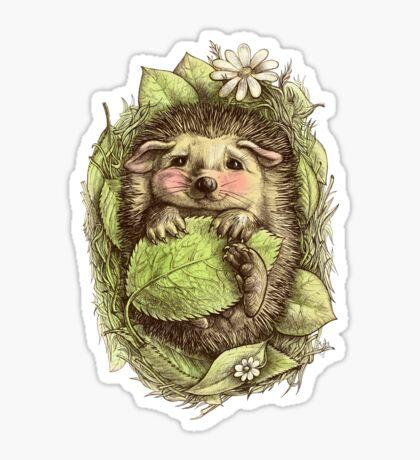 Little hedgehog colored Sticker