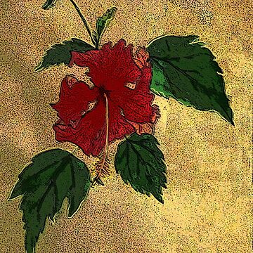 hibiscus - card by JamesLHamilton