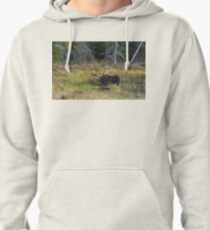 Bull Moose, Algonquin Park Pullover Hoodie