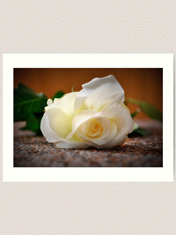 Alternate view of White rose Art Print
