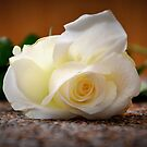 White rose by gabriellaksz