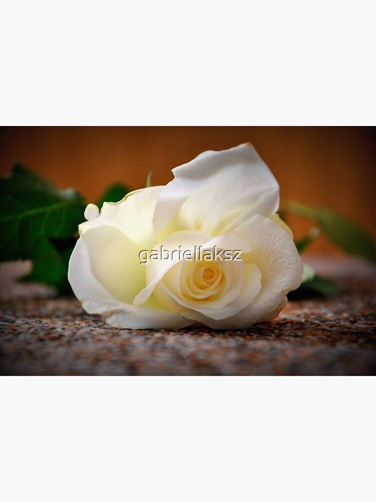 White rose by gabriellaksz
