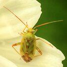 Cute Bug on Green & White by Michael Matthews