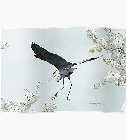 Great Blue Heron in Spring Poster