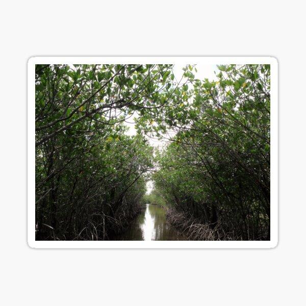 Mangrove Tunnel Sticker