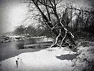 Snowy Stouts Creek by FrankieCat