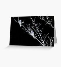 NightBirds Song Greeting Card
