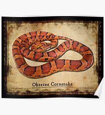 Okeetee Cornsnake Poster