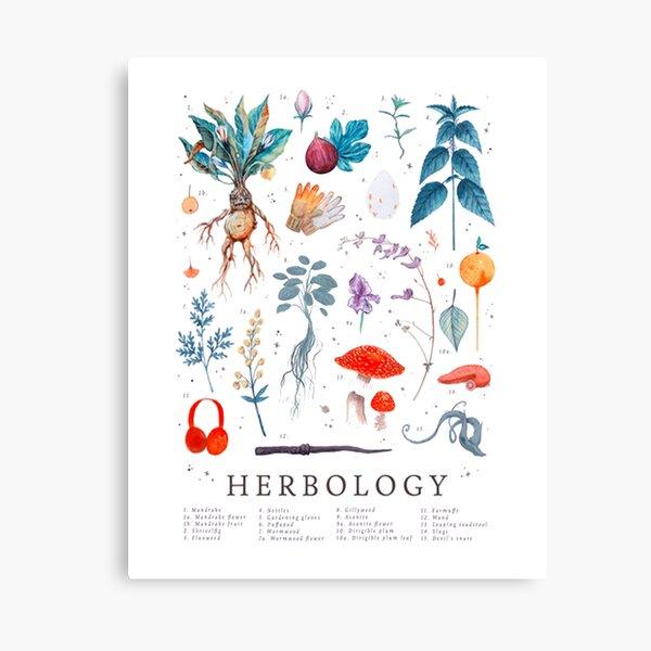 Herbologie plantes Harry Impression sur toile