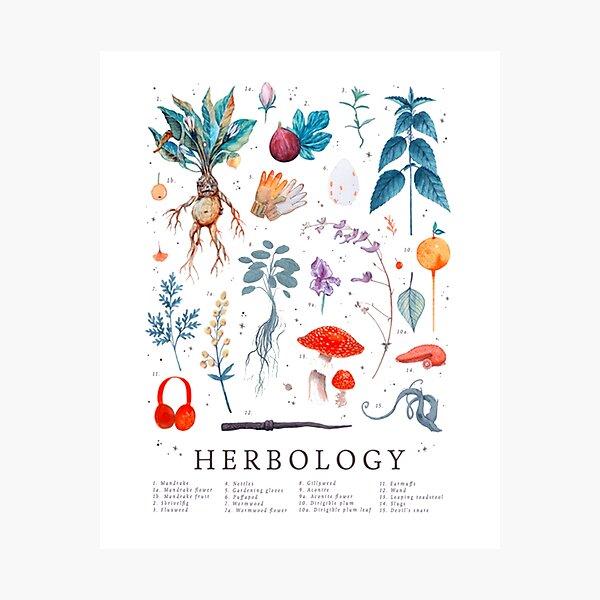 Herbología Harry Plantas Lámina fotográfica
