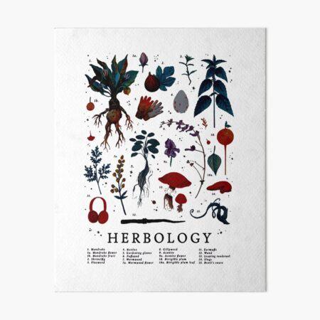 Herbologie Harry Plant Impression rigide
