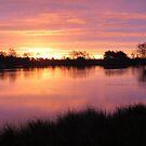 Magenta Lila Sunrise by ienemien