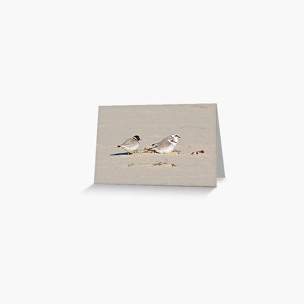 SHOREBIRD ~ Hooded Plover McNRvUjj by David Irwin Greeting Card